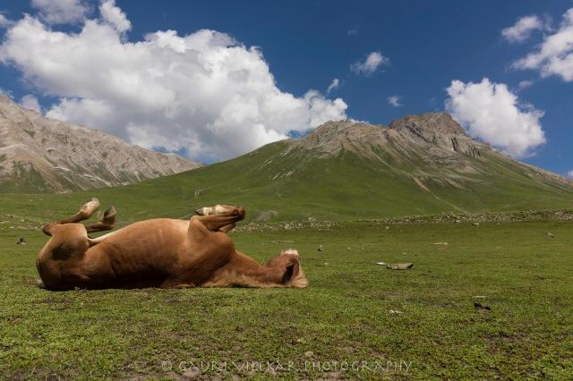 lazy horse-4683